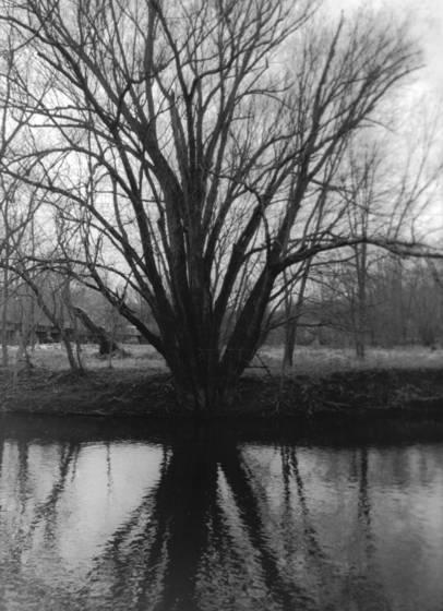 Tree at brandywine museum