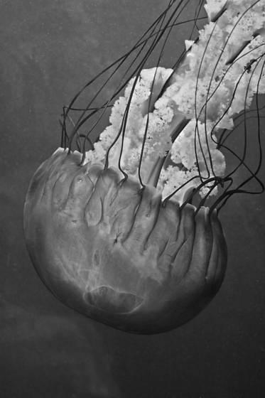 Flow brain
