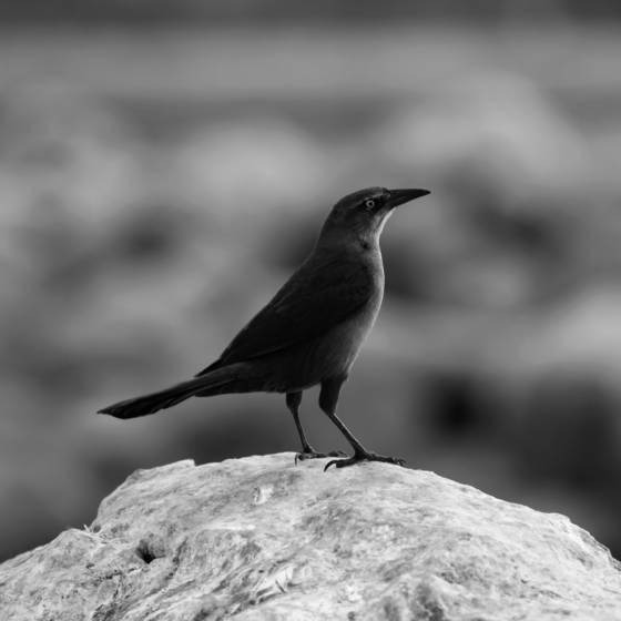 Bird confident