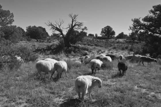 3 grazing