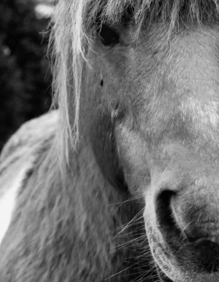 Park hotel pony