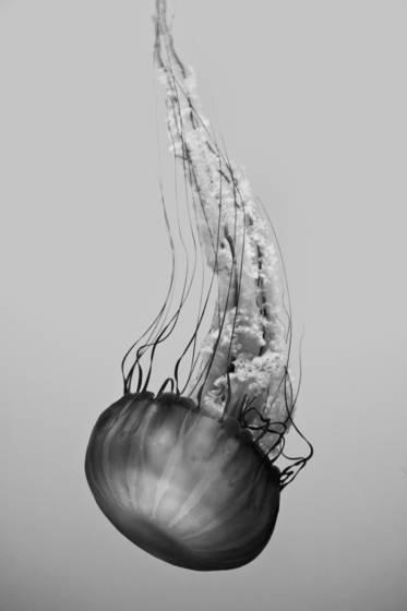 Sea dance 4