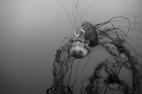 Sea dance 6
