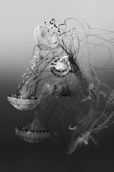 Sea dance 7