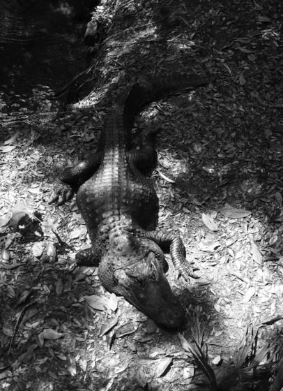 Gator hole 1