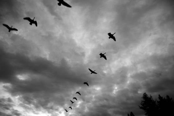 Eleven and a half birds