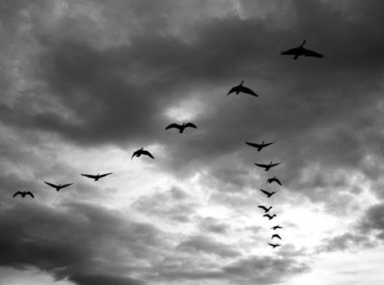 Sixteen birds closer