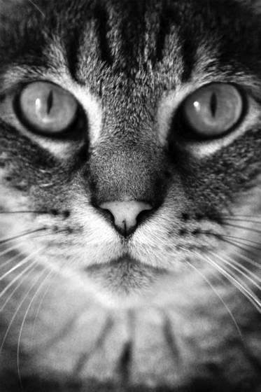 My cat nemo