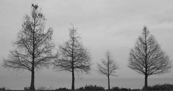 Winter   lake apopka