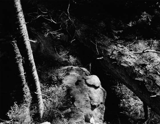 Sticks and stones 1
