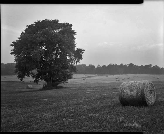 Beale farm