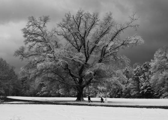 Winter oak 2