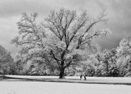 Winter oak 5