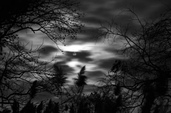 Moonlight serenity 8