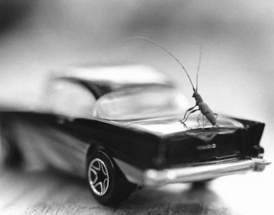 Bug sedan