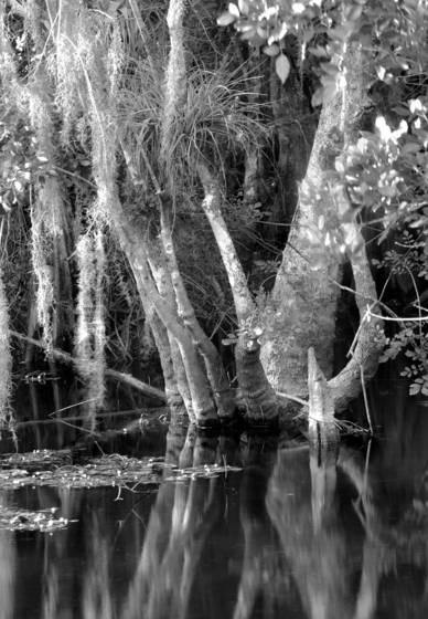 Cypress hammock