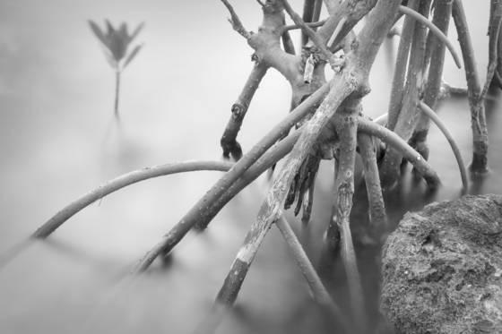 Mangrove garden 2