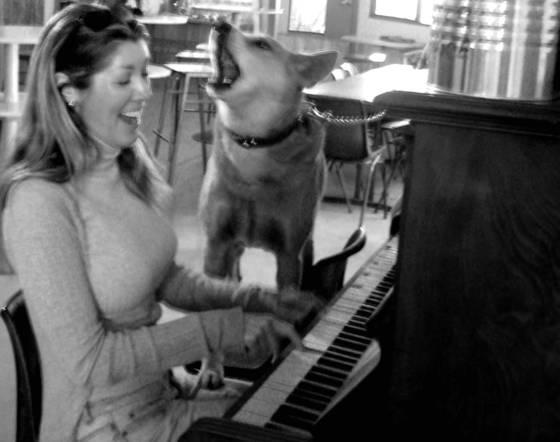 Singing dingo dog