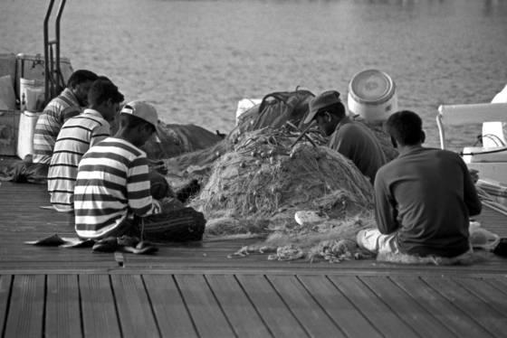 Fish market 8