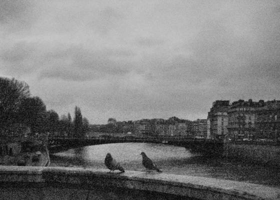 Birds on a bridge 3