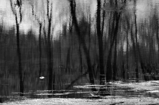 Swamp wade 10