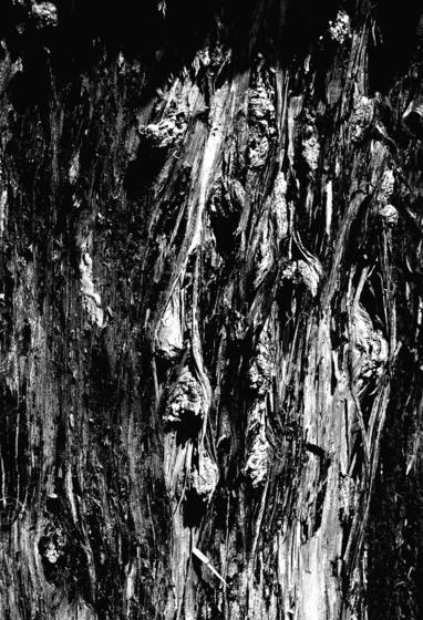 Face in the wood 2