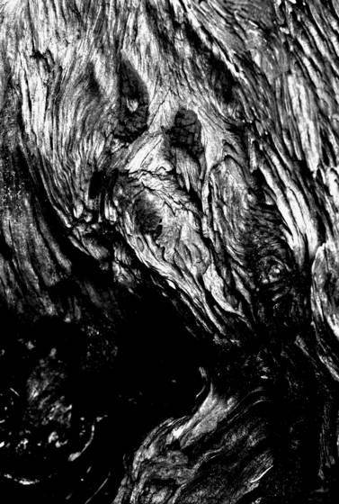 Face in the wood 4