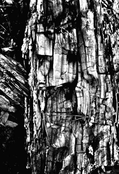 Face in the wood 5