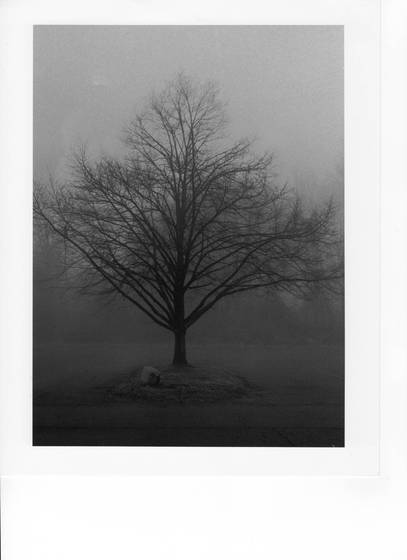 Tree morning fog