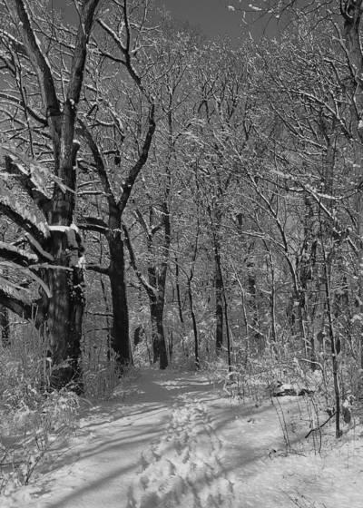 Winter in the oak grove
