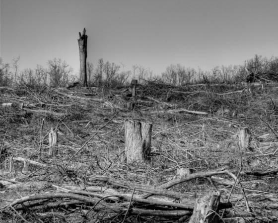 Tree field  3
