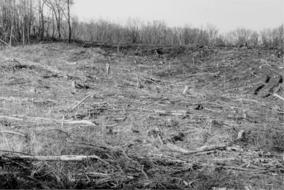 Tree field  6