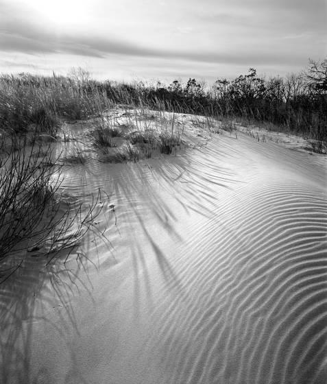 Dune ripple