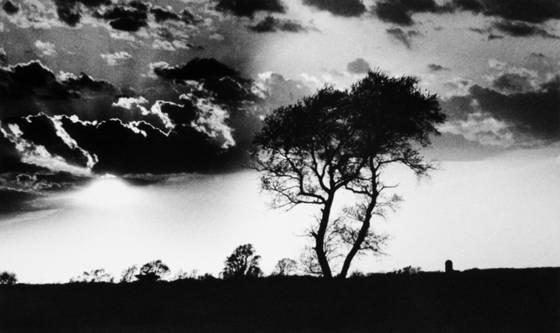 The serengeti     i wish