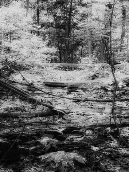 Fallen trees jpg