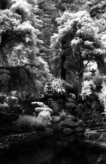 Korean gardens in infrared  1