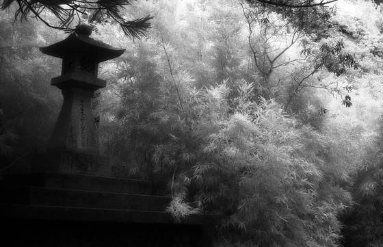 Korean gardens in infrared  3