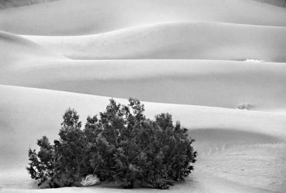 Triple dune