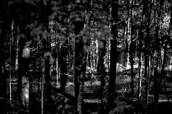 Forest through trees