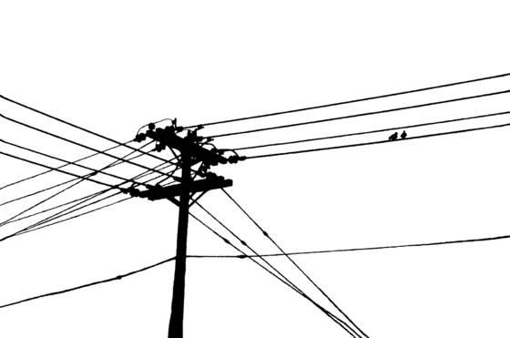 Urban birds  4