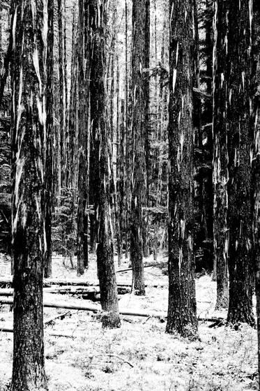 Hidden forest 1