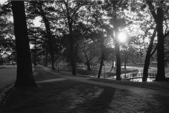 Deering park sun