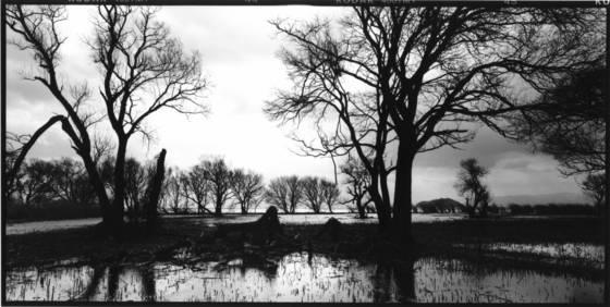 Trees beside a lake