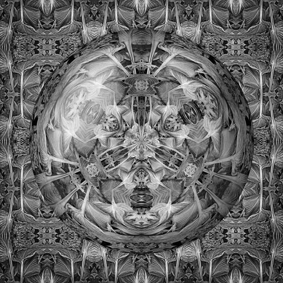 Wilted hostas in glass sphere tif