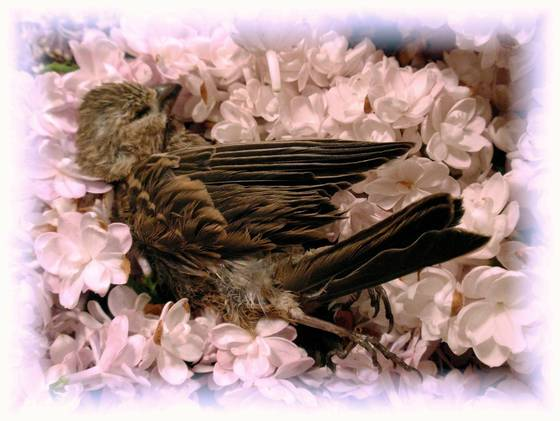 At rest in lilacs