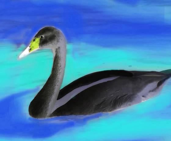 Negative swan