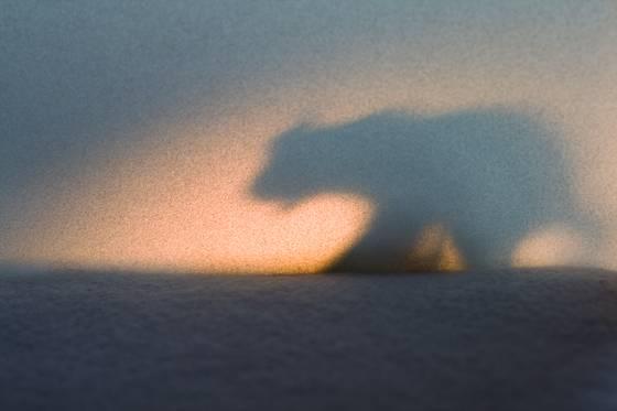 Arctic mood  77