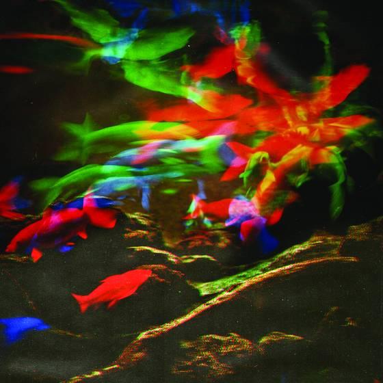 Aquarium series no  5