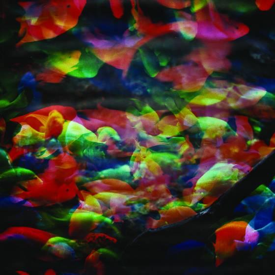 Aquarium series no  6
