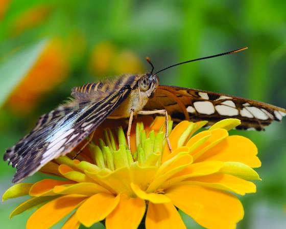Butterfly 5644